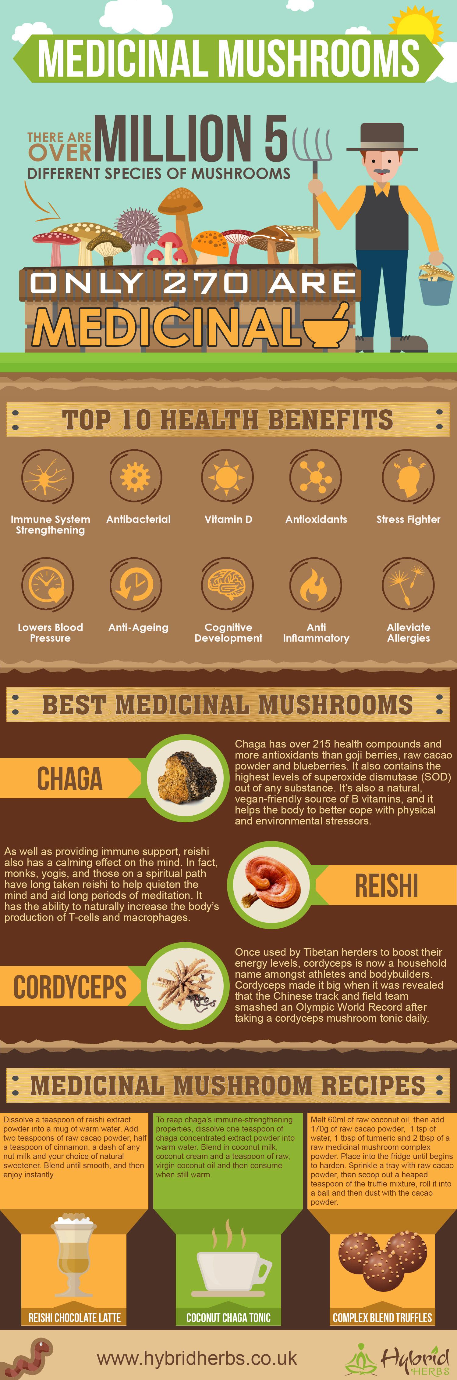 medicinal-mushroom-benefits.jpg